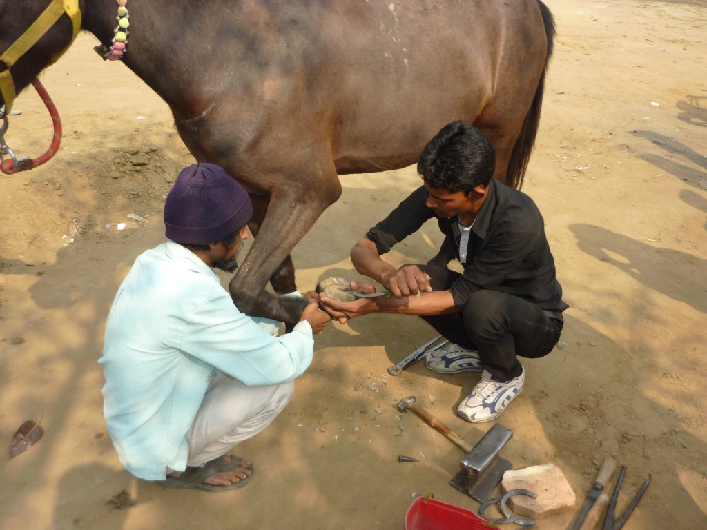 Farriery shoeing a horse